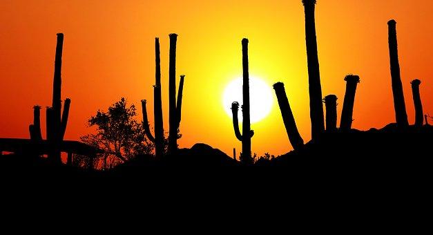 Sunset, Park, America, Cactus, Saguaro, Landscape