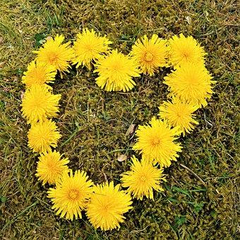 Maskros, är, Fin, Hjärta, Heart