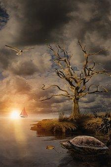 Pond, Lake, Sea, River, Sailing, Sun, Sunset, Seagulls