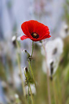 Flowers, Nature, Wildflower, Field, Republic Of Korea