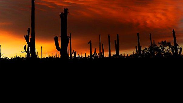 Sunset, Park, American, Cactus, Saguaro, Nature