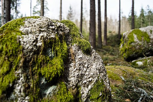 Stone, Nature, Spring, Moss, Easter, Green, Forest