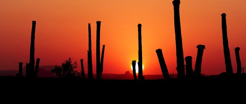 Sunset, Park Saguaro, America, Landscape, Wild, Cactus