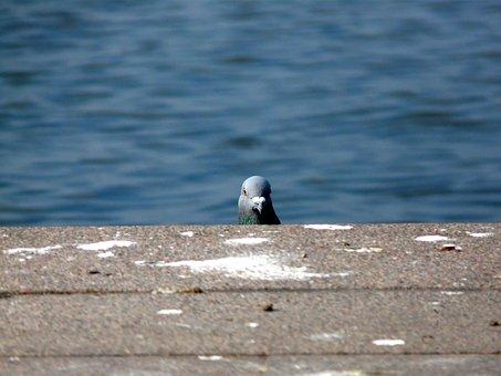 Dove, Bird, Hello, Animal, Funny, Look, Head, Snapshot