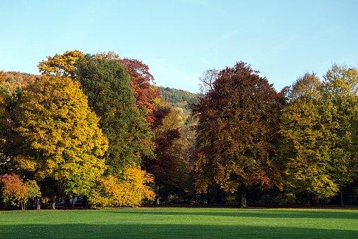 Autumn, Leaves, Fall Leaves, Autumn Colours, Fall Color