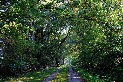 Forest, Forest Path, Autumn, Canopy, Idyll, Green