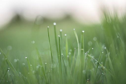 Grass, Drops, Blades, Field, Meadow, Romantic, Charming