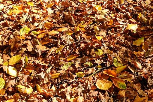 Leaves, Beech, Oak, Autumn, Foliage, Fallen, Colors
