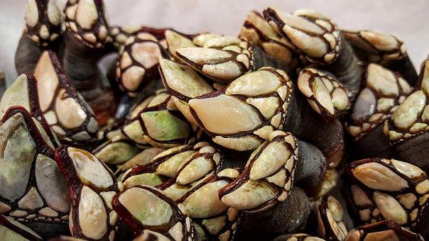 Ducks Shells, Mussels, Specialty, Gourmet, Gourmet Food