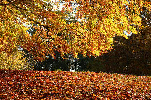 Autumn, Fall Foliage, Leaves, G, Colorful, Forest Floor