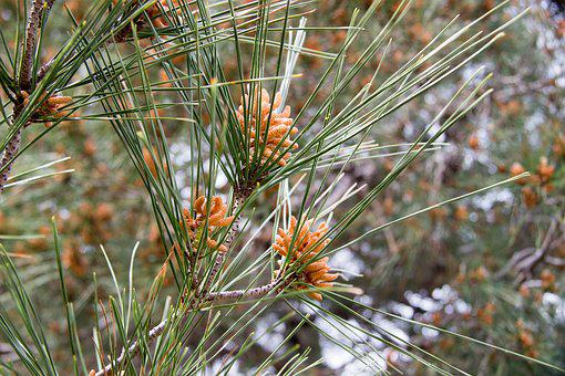 Plant, Greens, Grow Up, Nature, Green, Summer, Closeup