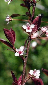 Branch, Bush, Cherry, Purple, Leaf, Sand, Nature
