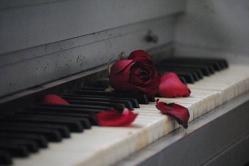 Piano, Rose, Red, Flower, Love, Romance, White