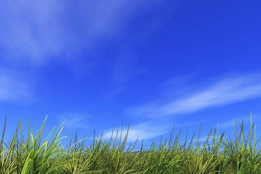 Refreshing, Hill, Field, Summer, Earth, Sun