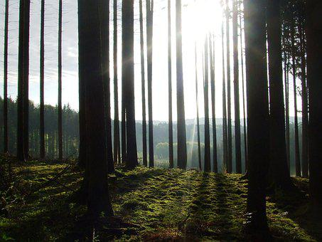 Tree, Back Light, Sun, Forest, Nature, Mood