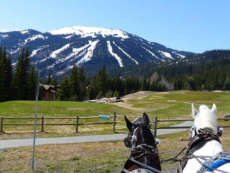Carriage Horses, Sun Peaks, Ski Resort