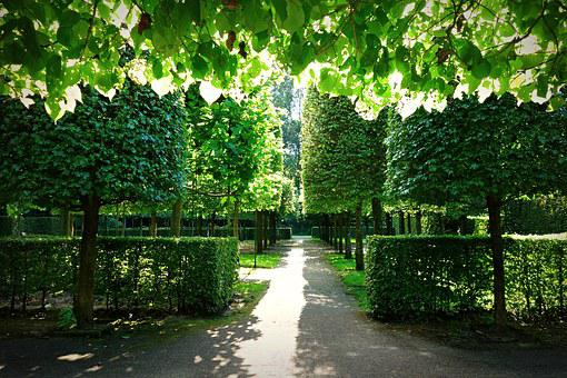 Garden, Formal Garden, Dutch Garden, Design, Symmetry
