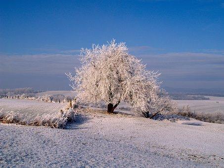 Hoarfrost, Winter, Iced, Winter Mood, Frozen, Tree
