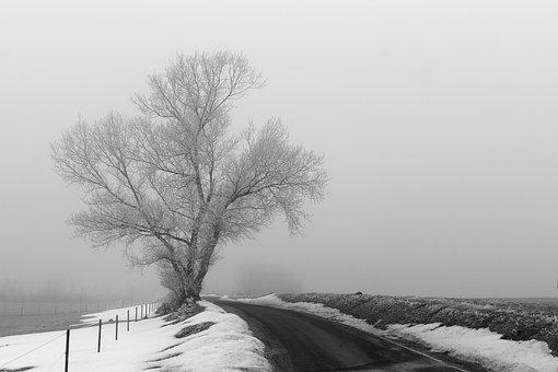 Wood, Winter, Fog, Rim, Frost, Landscape
