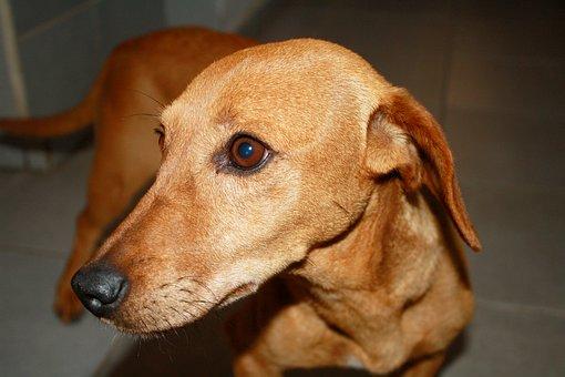 Dog, Profile, Friend, Pet, Brown, Animals, Puppy