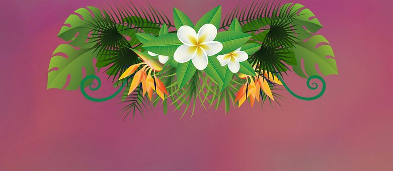 Tropical, Exotic, Background, Wallpaper, Pink, Greenery