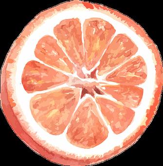 Grapefruit, Citrus, Vector, Watercolor, Incision