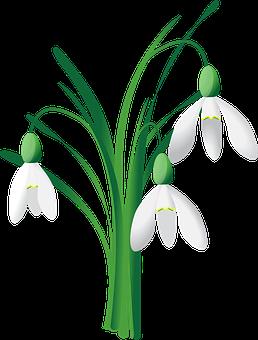 Snowdrop, Spring, Flower, White, Nature