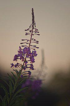 Flowers, Sweetness, Fresh, Light, Sifted