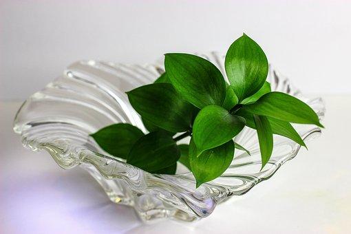 Leaf, Crystal Base, Plant, Green, Spring, Garden