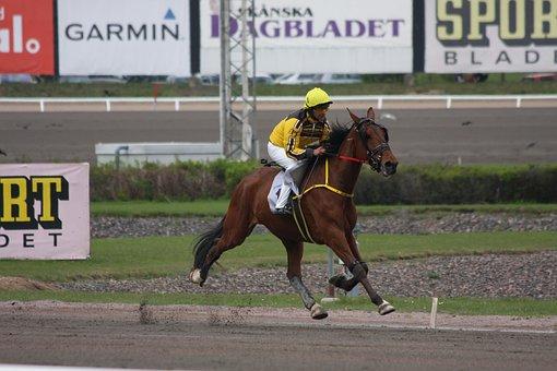 Horse, Monte, Animals, Horses