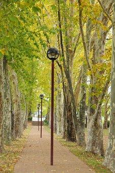 Lamp, Post, Trees, Light, Path, Leaves