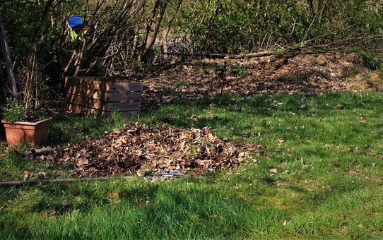 Spring, Gardening, Leaves, Leaves Return, Garden
