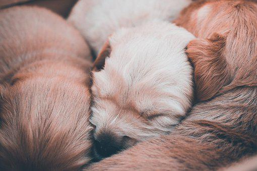 Dogs, Pupies, Animals, Cute, Family, Newborn, Kid