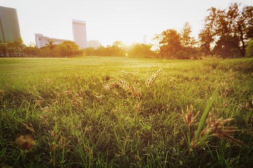 Landscape, Nature, Background, Beautiful, Forest, Park