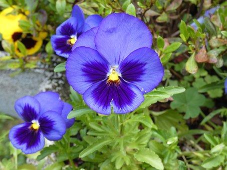Flower, Summer, Violet, Flowers, Garden