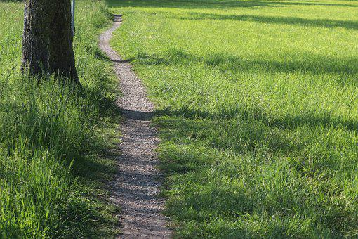 Away, Path, Nature, Hiking, Forest Path, Trail, Tree