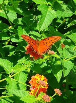 Lantana, Flower, Orange, Butterfly, Garden, Summer