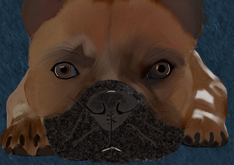 French Bull Dog, Dog, Cute, Domestic, Canine, Pedigree