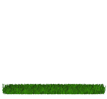 Grass, Floor, Green, Garden, Outdoor, Summer, Plant