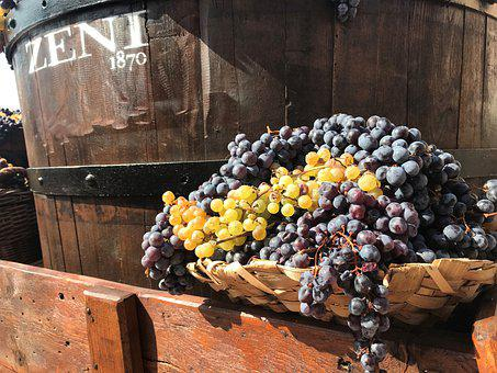 Grapes, Wine, Harvest, Winegrowing