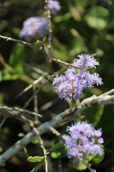 Trees, Blossom, Spring, Floral, Flora