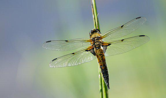 Goldsmith, Insect, Vial, Natural, Filigree, Wing