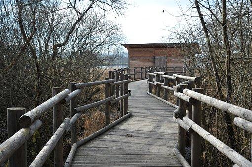 Observatory, Birds, Gateway Wood, Montigny-en-morvan