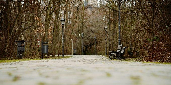 Park, Winter, Nature, Season, Outdoor