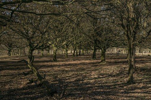 Tree, Path, Forest, Interior, Nature, Trees, Autumn
