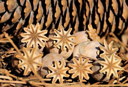 Poppy, Heads, Seed, Dried, Plant, Dry