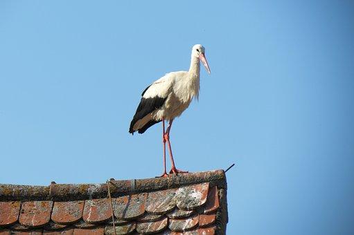 Stork, Roof, Standing