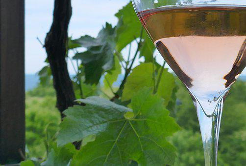 Rose, Wine, Vine, Romantic, Drink, Sea