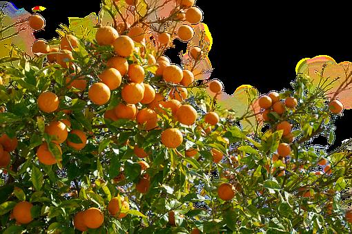 Oranges, Fruit, Isolated, Orange