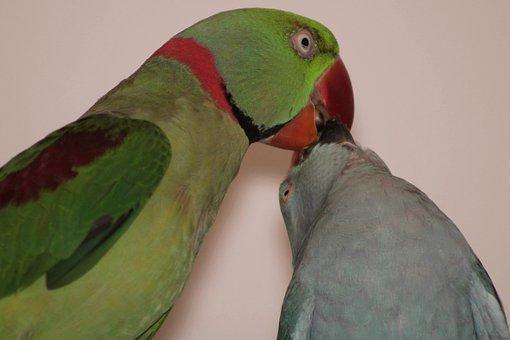 Parrot, Colorful, Bird, Animal, Animal World, Plumage